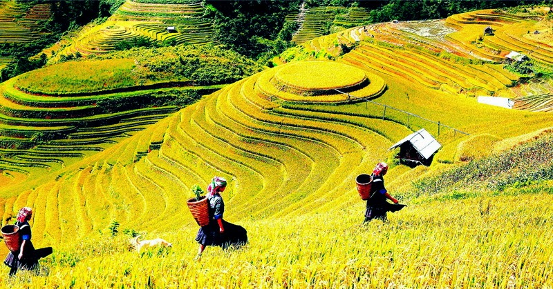 TOUR IN THE NORTH OF VIETNAM AND THE REGIONS IN HA GIANG